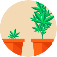 Track your grow