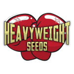 Heavyweight Seeds - Strawberry Cheesecake