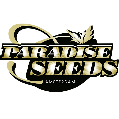 Paradise Seeds - Sweet Purple