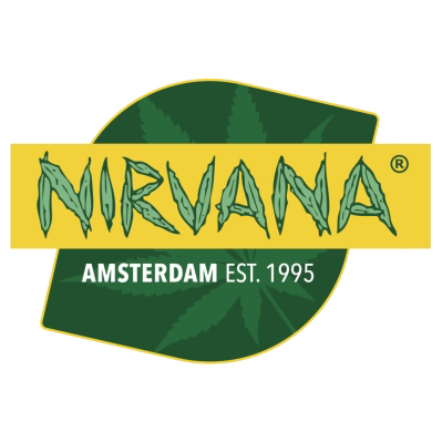 Nirvana - Swiss Cheese Autoflower