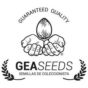 Gea Seeds - Black Kush 98