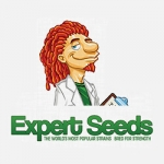 Expert Seeds - Gorrila Glue #4 × Cheese