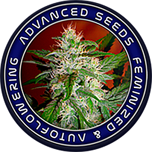 Advanced Seeds - Auto Blue Diesel