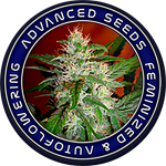 Advanced Seeds - Ice Kush