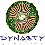 Dynasty Seeds