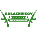 Kalashnikov Seeds - White Critical Express