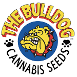 The Bulldog Seeds - Strawberry Ice