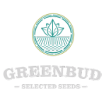 Green Bud Seeds - Lemon Pie