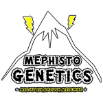 Mephisto Genetics - 4 Assed Monkey