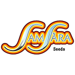 Samsara Seeds - Holy Grail 69