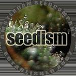 Seedism - Champagne Kush