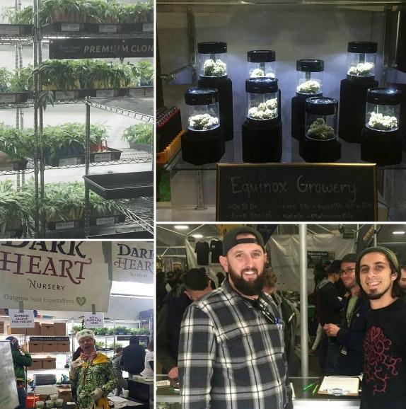 Dark Heart Nursery breeder  Seed bank info - GrowDiaries
