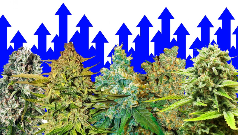 Cannabis 2021