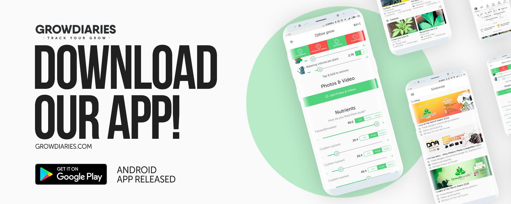 hello status app download