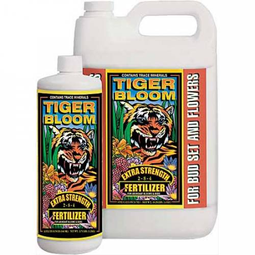 Tiger Bloom