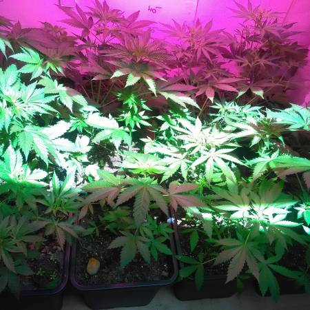 BIO/Organic Experimental Grow !