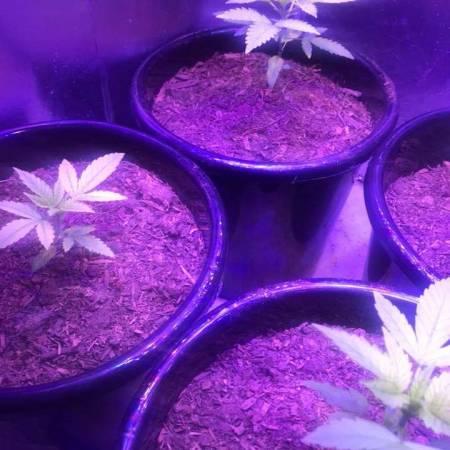 Paisa Grow