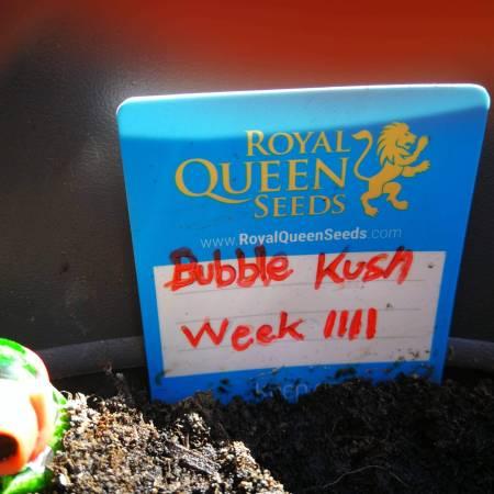 First time grow. BubbleKush, Femi,