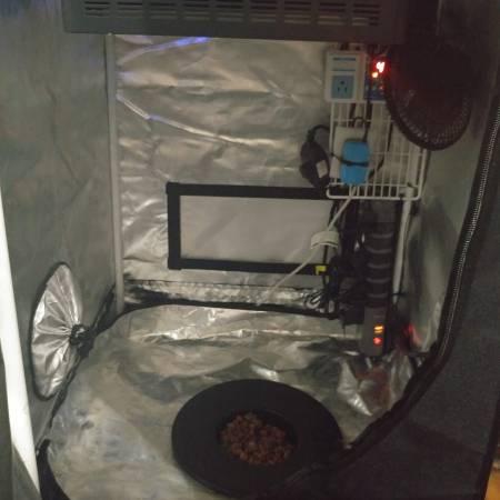 Modified Tent - DWC w/ LED ~ Auto-Fem