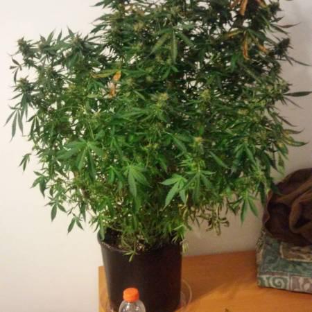 1st grow
