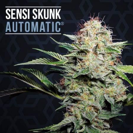 Sensi Skunk Automatic
