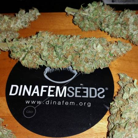 Dinafem Cheese