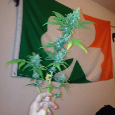 First Auto Grow (old pics)