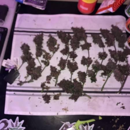 LSD-25 auto first grow