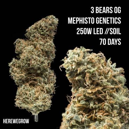 3 Bears OG