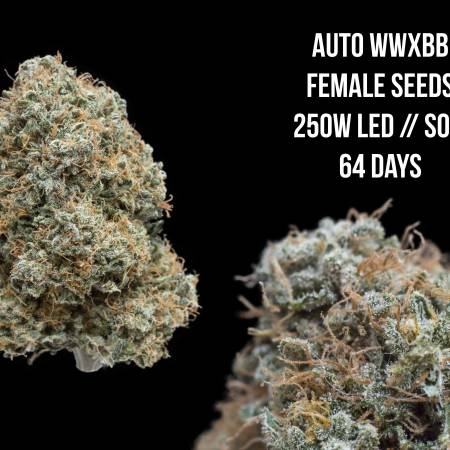 Auto WWxBB