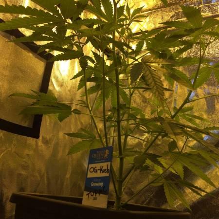 4 plants 4 strains