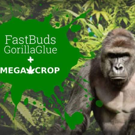 GorillaGlue with MegaCrop