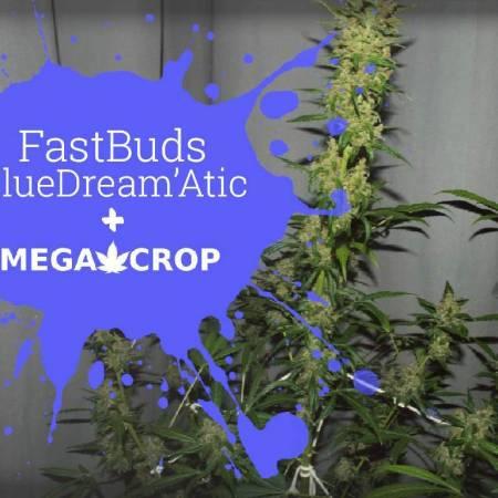 Blue Dream'attack