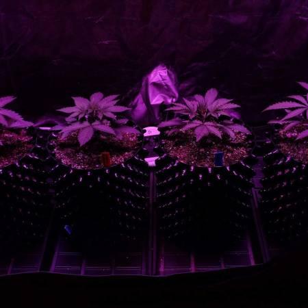 Grow5