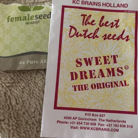 KC Brains Sweet Dreams