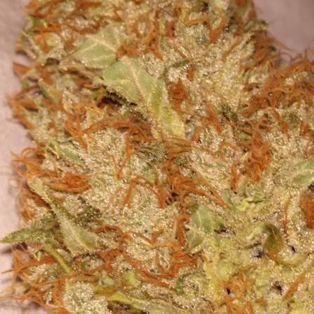 White Widow x Big Bud - First Grow