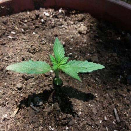 GrowBarato.net a granel