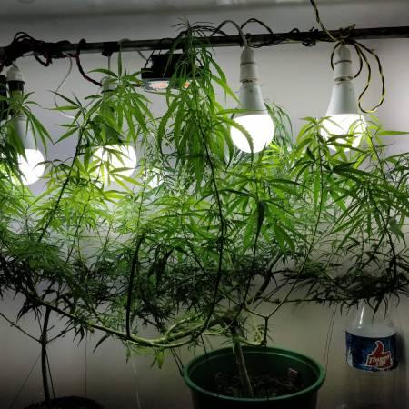 Second Grow