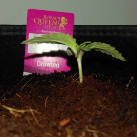 Shifty420 led grow (sponsored)