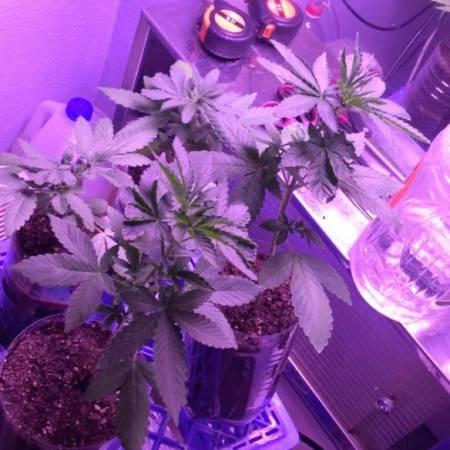 Grow #2