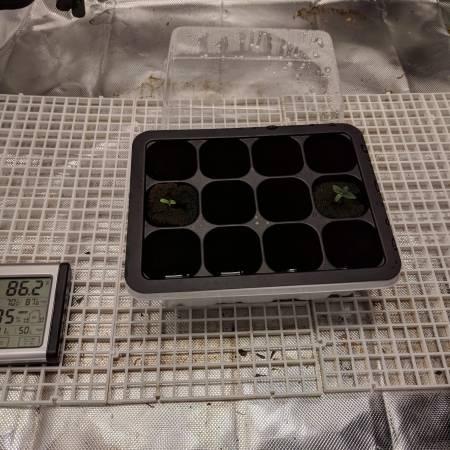 3rd Grow, QB 135W