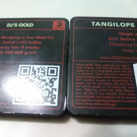 Tangilope & Djs Gold