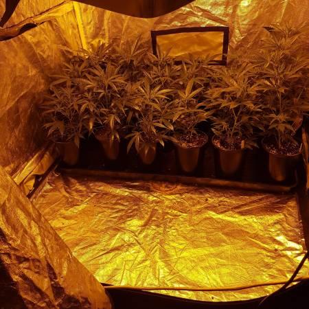 Multi strain tent
