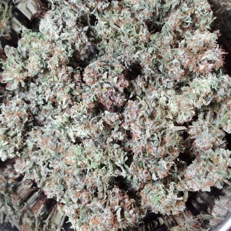 auto flowering k.o. crop, gorilla glue