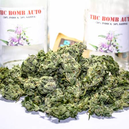 THC BOMB STRAIN GROWERS REVIEW ( AUTO )