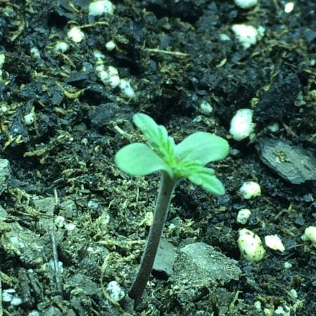 Grow #1