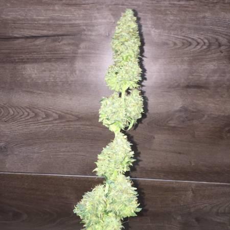 My grow2