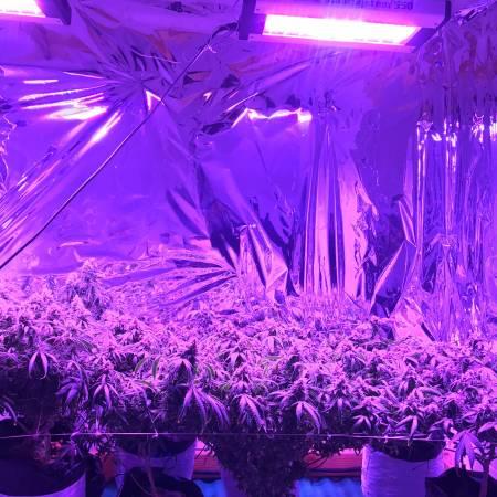 Bay Area First multi Strain Grow Op