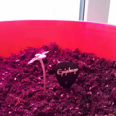 Lowryder First ever growing