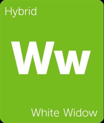 WhiteWidow